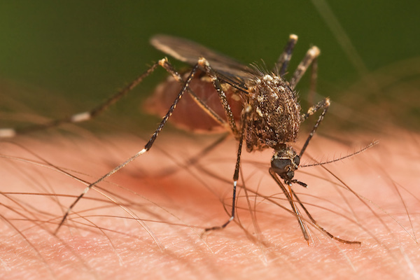 Mosquitoes have many sensors designed to track their prey